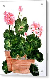 Geraniums In Clay Pots Acrylic Print by Terri Mills