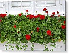Geraniums On Window Acrylic Print by Elena Elisseeva