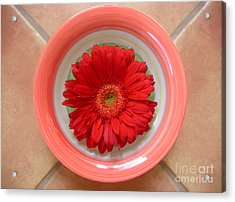 Gerbera Daisy - Bowled On Tile Acrylic Print by Lucyna A M Green