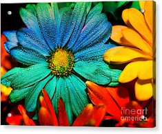 Gerbera Daisy Acrylic Print by Tina LeCour