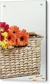 Gerbera In A Basket Acrylic Print