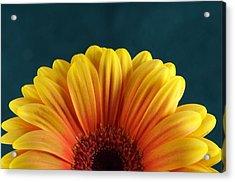 Gerbera Sunrise Acrylic Print