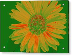 Acrylic Print featuring the photograph Gerbia Daisy Sabattier by Bill Barber