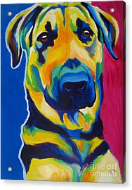 German Shepherd - Duke Acrylic Print by Alicia VanNoy Call