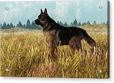German Shepherd Acrylic Print