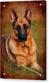 German Shepherd Dog Portrait  Acrylic Print