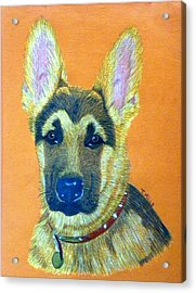 German Shepherd Dog Acrylic Print by Terri Mills