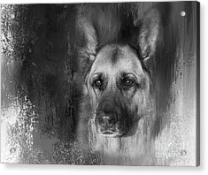 German Shepherd In Black And White Acrylic Print