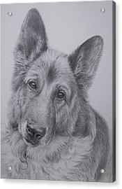 German Shepherd Acrylic Print by Keran Sunaski Gilmore