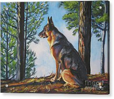 German Shepherd Lookout Acrylic Print
