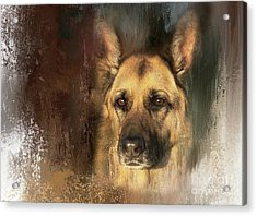 German Shepherd Portrait Color Acrylic Print