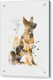 German Shepherd Acrylic Print by Rebecca Jenkins
