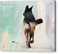 German Shepherd Taking A Walk Acrylic Print
