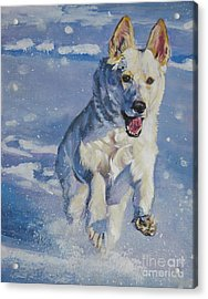 German Shepherd White In Snow Acrylic Print