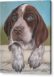 Acrylic Print featuring the painting German Shorhaired Pointer Puppy by Jindra Noewi