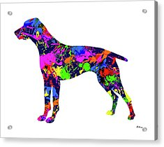 German Shorthaired Pointer Paint Splatter Acrylic Print
