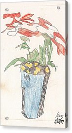 Acrylic Print featuring the drawing Gesture Drawing Of Poinsettia by Rod Ismay