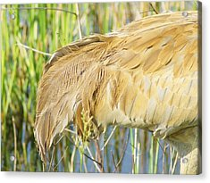 Acrylic Print featuring the photograph Get Some Tail by Lynda Dawson-Youngclaus