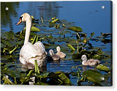 Getting Close To Mom Acrylic Print