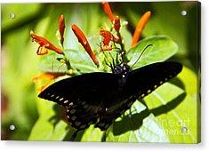 Getting The Nectar Acrylic Print