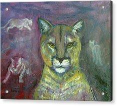 Ghost Cat Acrylic Print by Darla Joy  Johnson