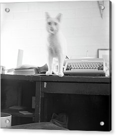Ghost Cat, With Typewriter Acrylic Print