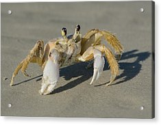Acrylic Print featuring the photograph Ghost Crab by Bradford Martin
