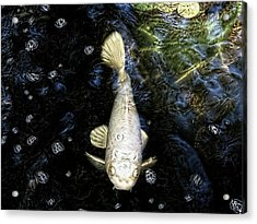 Ghost Fish Acrylic Print by Paul Cutright