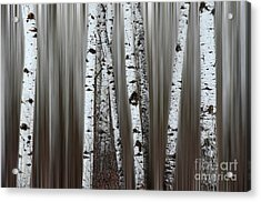 Ghost Forest 1 Acrylic Print by Bob Christopher