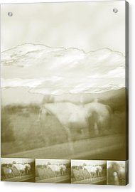 Ghost Horse Colorado Acrylic Print