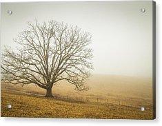 Tree In Fog - Blue Ridge Parkway Acrylic Print