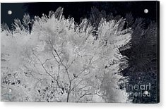 Ghost Of A Tree Acrylic Print