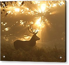 Ghost Of The Forest Acrylic Print by Greg Morgan