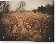 Acrylic Print featuring the photograph Ghost by Shane Holsclaw