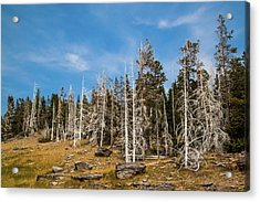 Acrylic Print featuring the photograph Ghost Trees At Yellowstone by Lon Dittrick