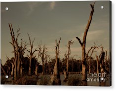 Ghostly Trees Acrylic Print by Douglas Barnard