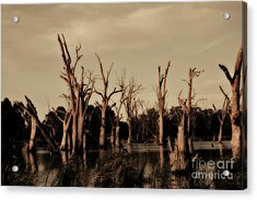 Ghostly Trees V2 Acrylic Print by Douglas Barnard