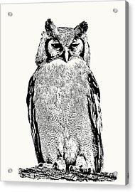 Giant Eagle-owl Perching Acrylic Print