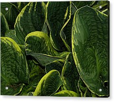 Giant Hosta Closeup Acrylic Print