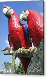 Giant Macaws Acrylic Print by Randall Weidner
