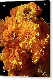 Giant Marigolds Acrylic Print
