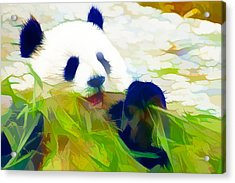 Acrylic Print featuring the painting Giant Panda Bear Eating Bamboo by Lanjee Chee