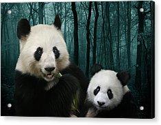Giant Pandas Acrylic Print by Julie L Hoddinott