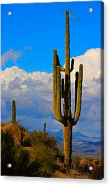 Giant Saguaro In The Southwest Desert  Acrylic Print