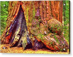 Giant Sequoia Base With Fire Scar Acrylic Print