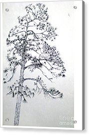Giant Silver Pine Tree Acrylic Print by Hal Newhouser