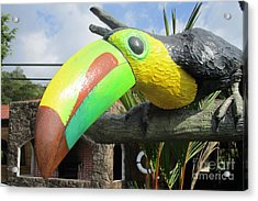 Giant Toucan Acrylic Print by Randall Weidner