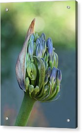 Gift Wrapped  Acrylic Print by Connie Handscomb