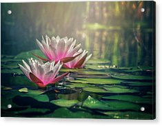 Gilding The Lily Acrylic Print