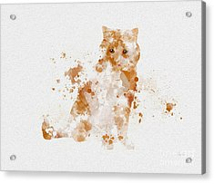 Ginger And White Cat Acrylic Print